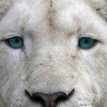 Imagen de perfil de maku_